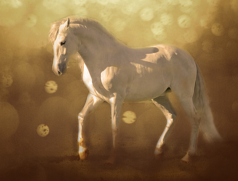 Karen McClymonds - Dream Stallion