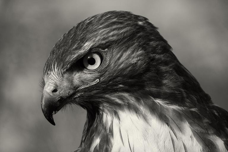 Mike Burgess_Hawk Eye_Cover