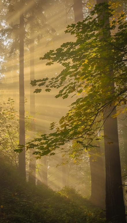 Richard Stover - Sun Beams Mt Tabor