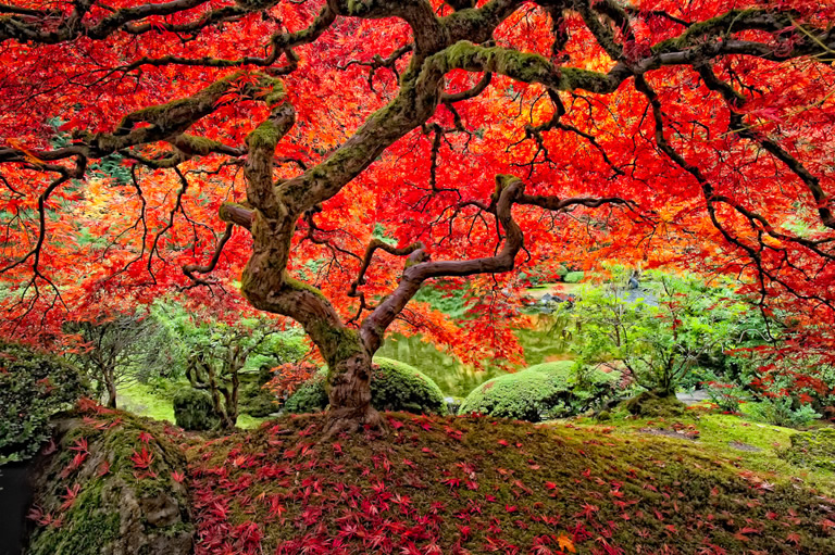 """The Tree"" by Lee Moore, taken at the Portland Japanese Garden"