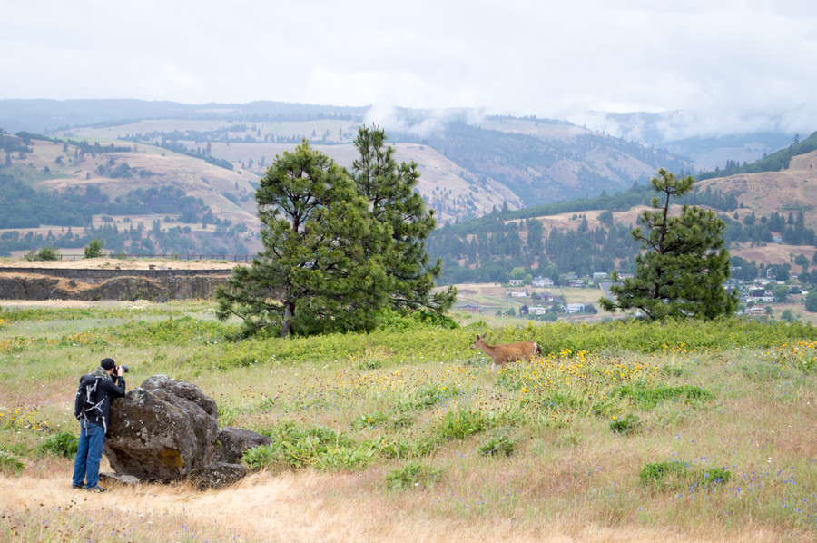 At the Tom McCall Preserve in the Columbia Gorge
