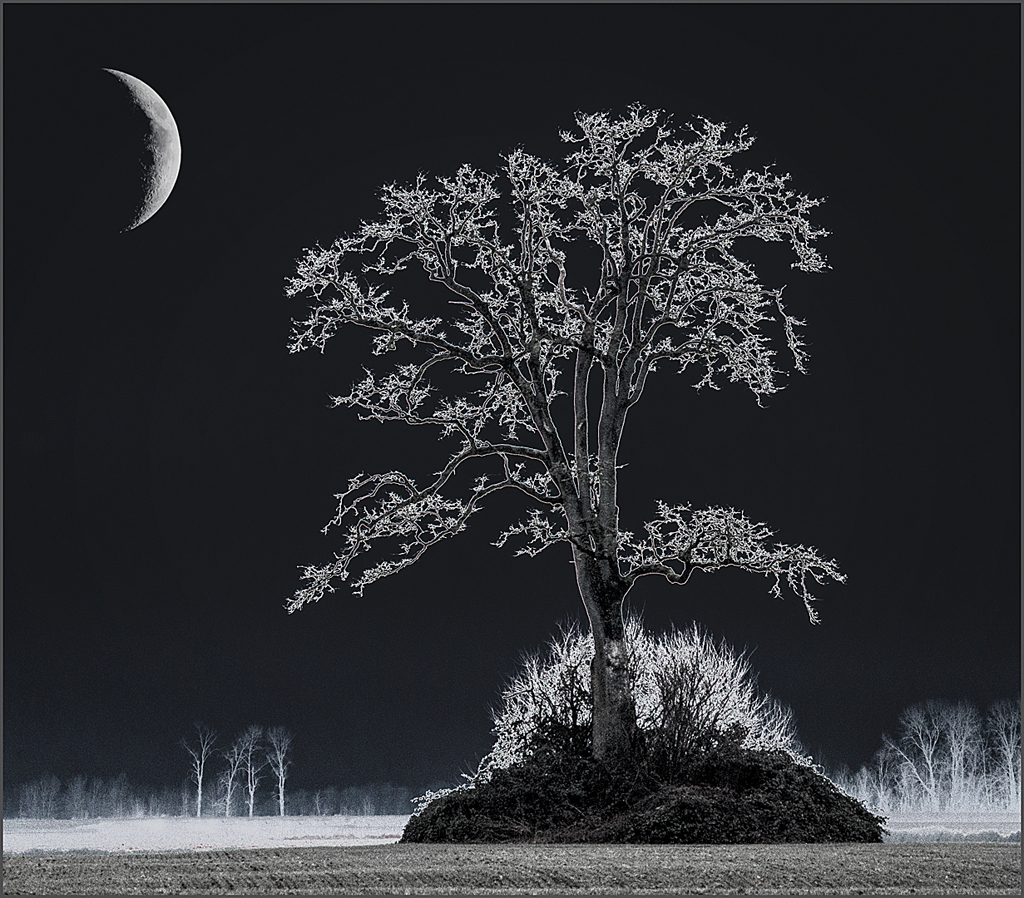 "1st place - ""Ghostly Tree"" - copyright Karen McClymonds"